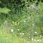 ItaliAdesso-bloemenveld-orobische-alpen-noord-italie-lombardije