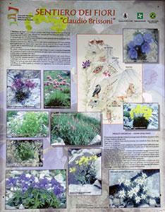 Flora-noord-italie, sentiero-dei-fiori