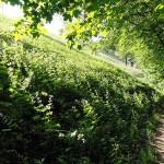 actieve-vakantie-wandelen-noord-italie-valle-brembana-orobische-alpen (7)