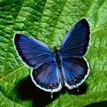vlinders-noord-italie, vlinders, orobische-alpen, gebergte, alpen, vakantie, wandelroute, noord-italie, italiadesso