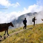 herder-alpen-noord-italie (1)