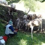 herder-alpen-noord-italie (3)
