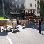 herder-alpen-noord-italie (6)