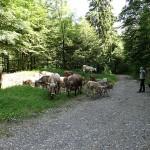 herder-alpen-noord-italie (9)