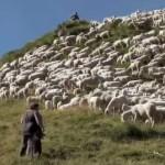 herder-alpen-noord-italie-ultimo-pastore-2