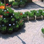 orto-botanico-bergamo-noord-italie-9