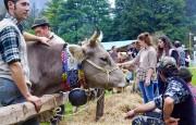 wereldkampioenschap, koeien_melken, melken, ItaliAdesso, Valle_Brembana, Noord_Italie